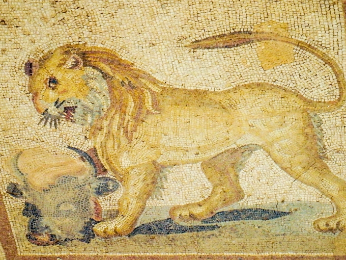 lion-1-of-1